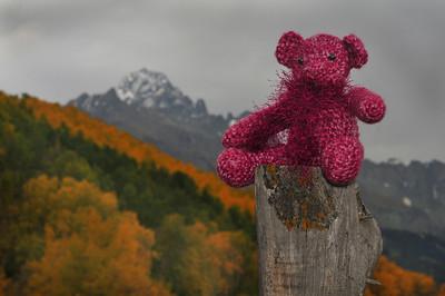 14er Bears