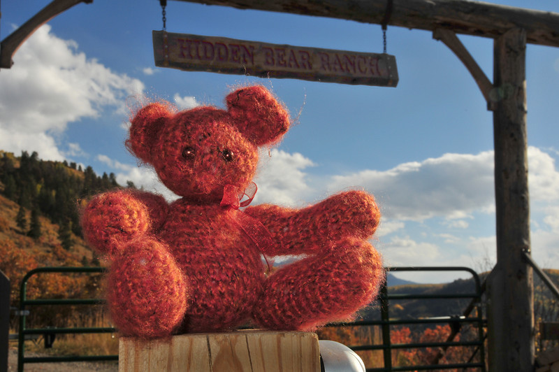 Cinnamon Bear at the Hidden Bear Ranch