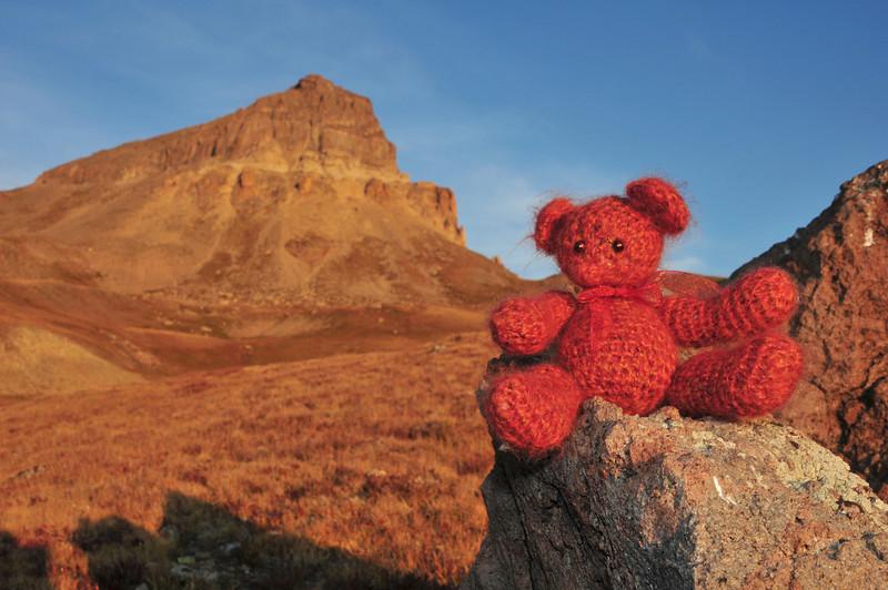 Uncompahgre Bear
