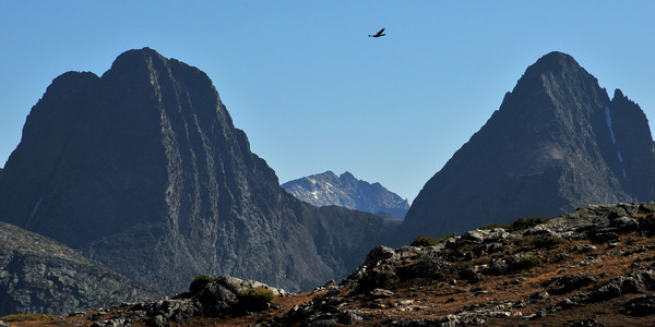 A Golden Eagle Soars above Vestal Peak, Mount Eolus and Arrow Peak<br /> 13,864 feet, 14,083 feet and 13,803 feet