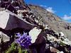 Castle Peak<br /> 14,265 feet