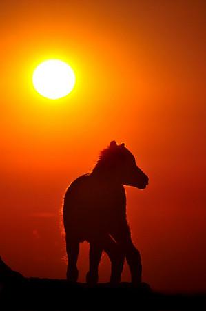 Baby Mountain Goat at Sunrise