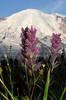 pink paintbrush