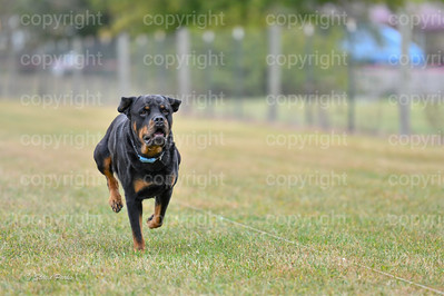 fast (629 of 1695)