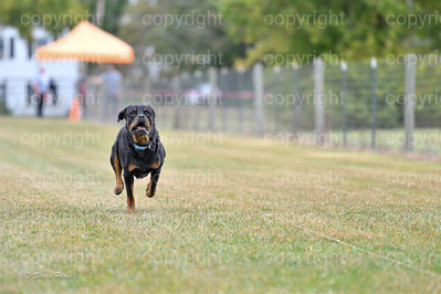 fast (624 of 1695)
