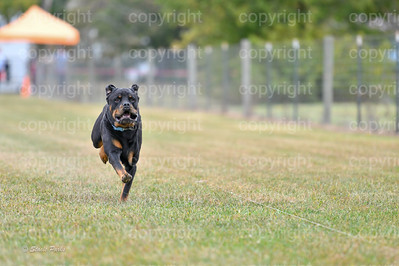 fast (626 of 1695)