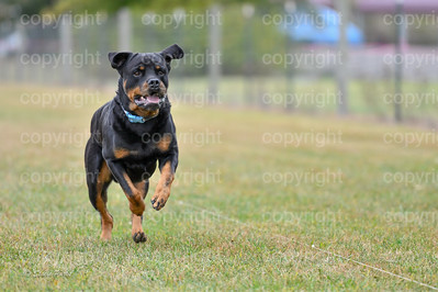 fast (630 of 1695)