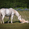 Kodiak's Saltery Cove Wild Horses have a new little Filly.
