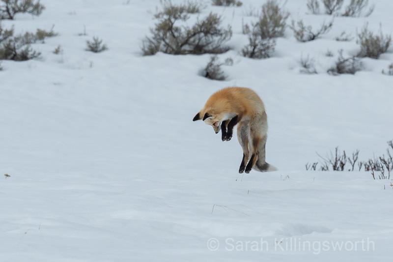 wyoming jump