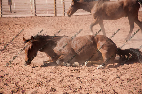 0070 - 2012 Caza Ladron Hounds Canyon de Chelly Weekend
