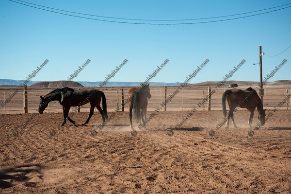 0031 - 2012 Caza Ladron Hounds Canyon de Chelly Weekend