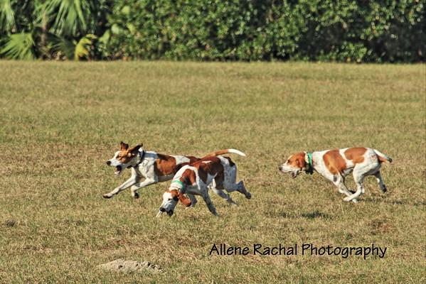 hdc hounds speakinng