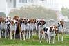 pfh-hounds-11