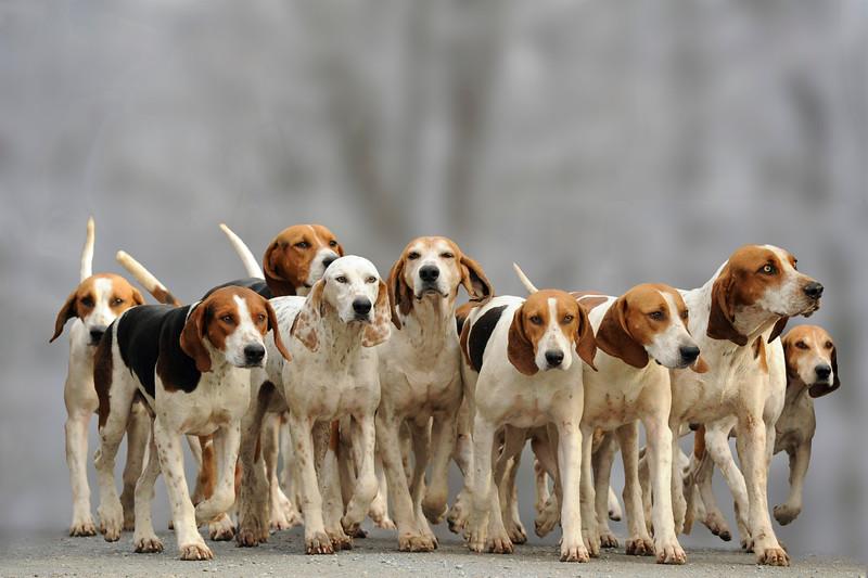 pfh-hounds-3