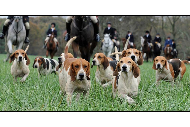 pfh-hounds-20(9x18)
