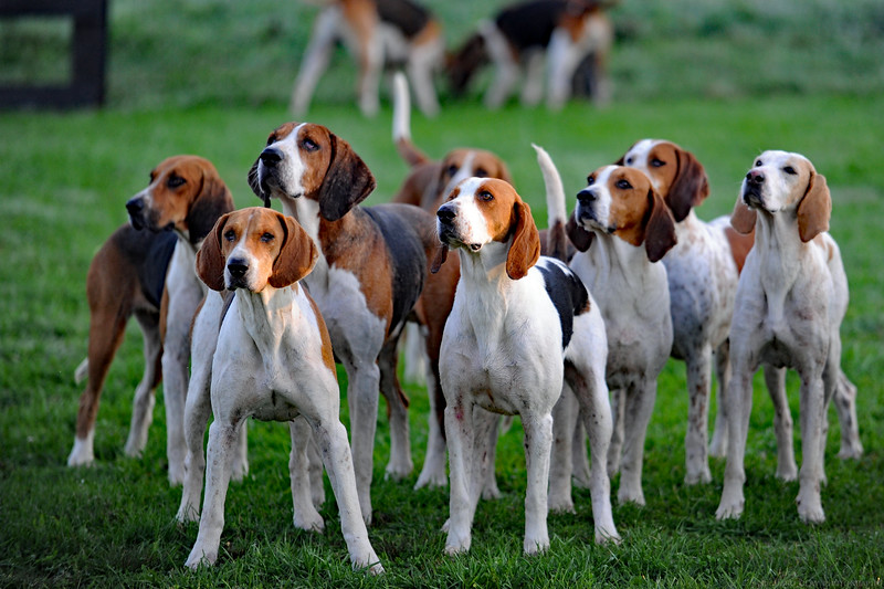 WH-Hounds-5