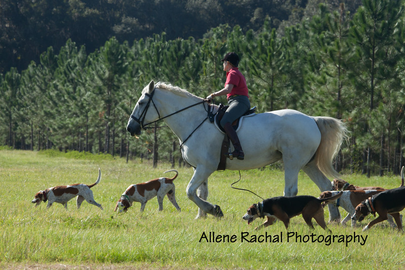 20161015 foxhunting-9005