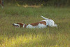 20161015 foxhunting-8811