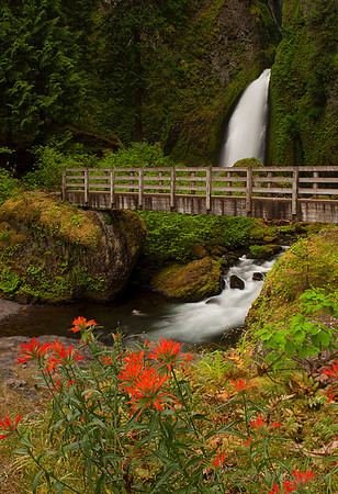 Wahclella Falls Columbia River Gorge  Wahclella Falls is located at the end of a 1 mile hike through the beautiful, dense Oregon forest. We started to hike at around 6 am, so other than the tree frogs, it was just us.  This shot was taken atop a large bolder that sat in the middle of the gorge, and the beautiful orange flowers just happened to be a little spring luck.