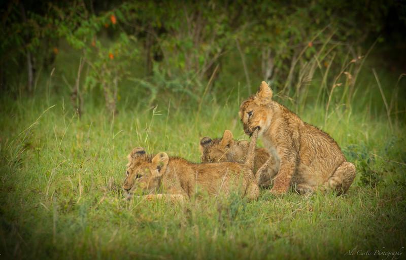 Maasai Mara National Park, Kenya