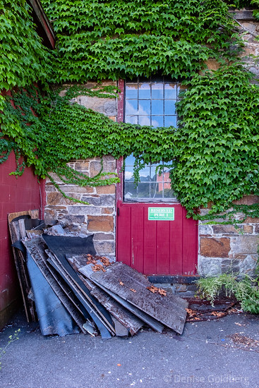 window covered in ivy, Lawrence, MA