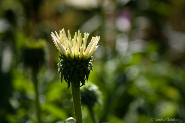 a yellow flower wearing spikes
