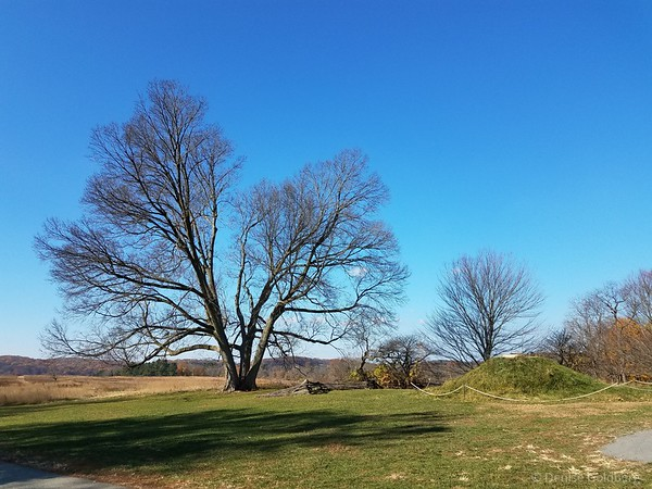 trees, in Valley Forge National Historical Park