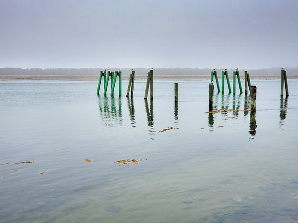 seagulls on posts