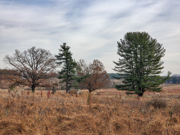 trees, Valley Forge National Park