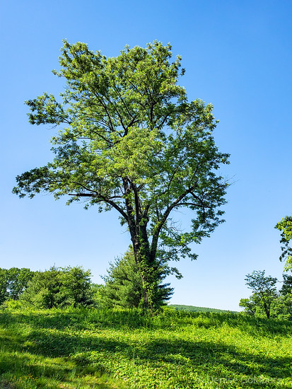 trees, Valley Forge National Historical Park