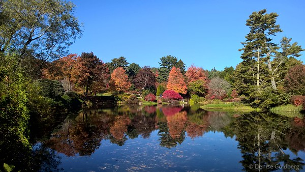 autumn at asticou azalea garden