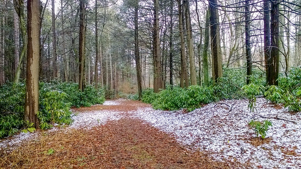 a path through the woods wearing just a touch of snow