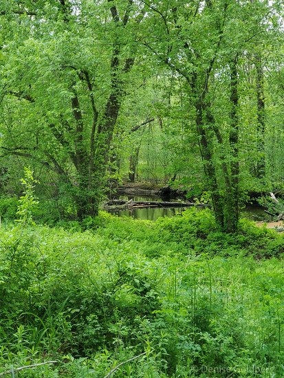 trees, undergrowth, and a bit of water