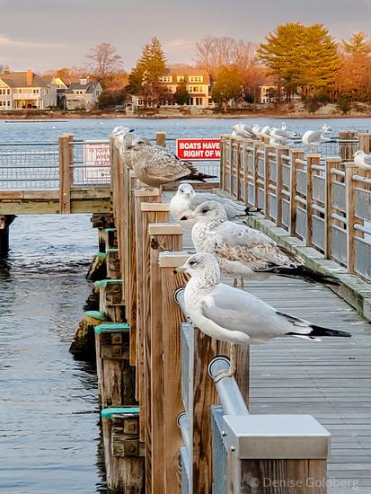 sea gulls on a pier