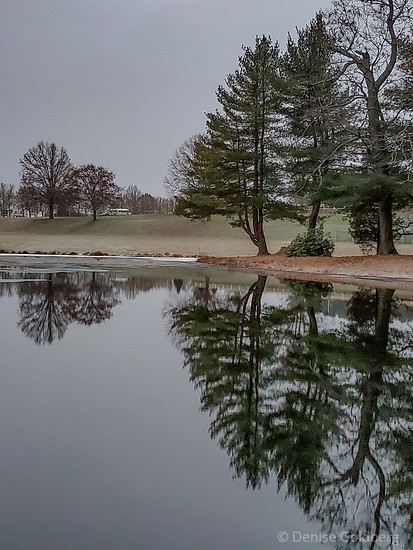 trees with reflection