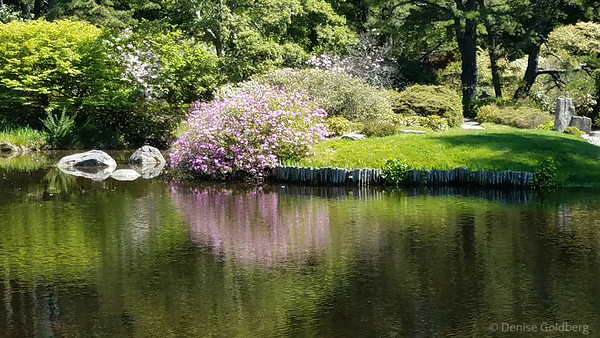at Asticou Azalea Garden