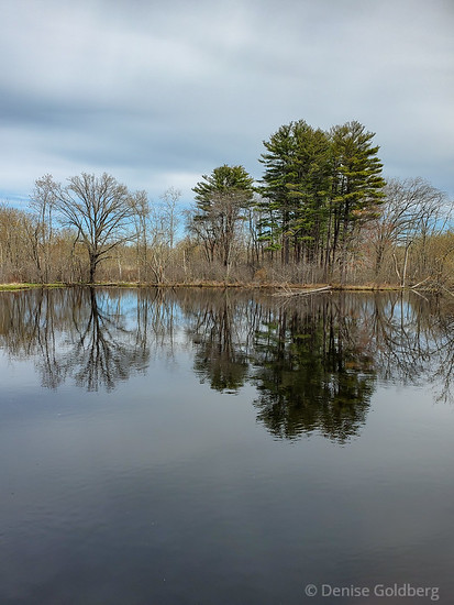 trees reflecting, Ipswich River