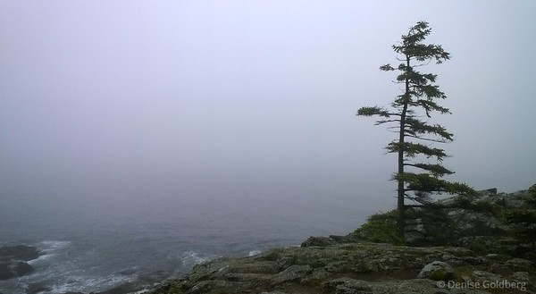 on Schooner Head, Acadia National Park