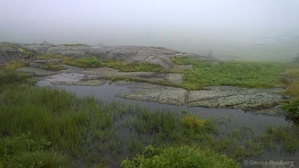 a foggy afternoon on Cape Spear