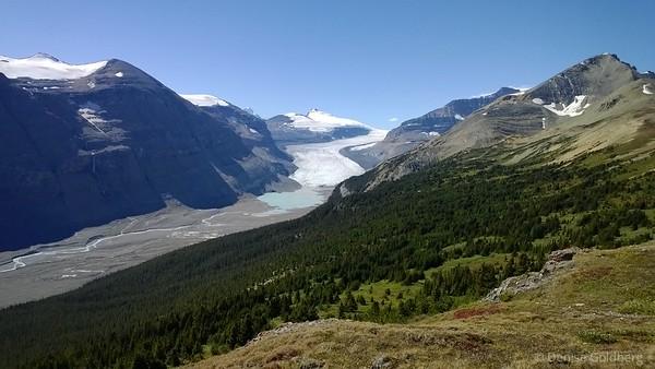 Saskatchewan Glacier from high on Parker Ridge