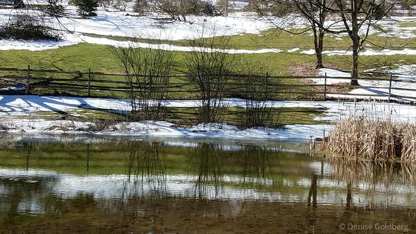 at Jenkins Arboretum