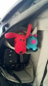 Rover & Blue in their hiding space in Denise's camera bag