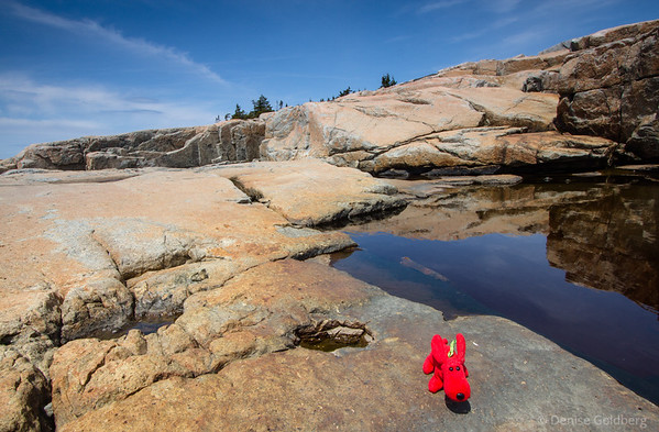 Rover in a favorite wandering spot, at the tip of the Schoodic Peninsula, Acadia National Park