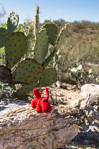 on a safe (not spiny like cactus!) rock in Saguaro National Park