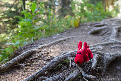 along a trail