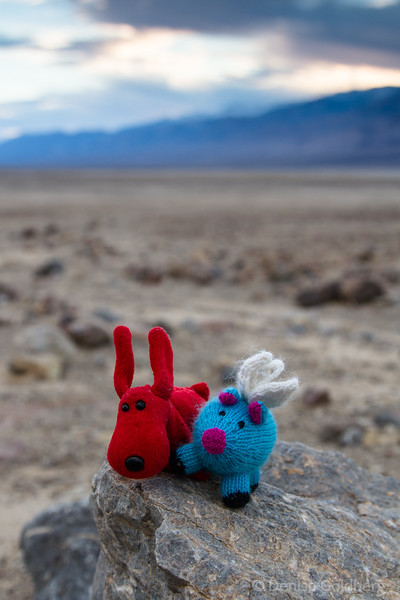 Rover and Blue, posing in late day light, Death Valley National Park