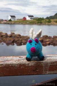 Blue, on a boardwalk in Salvage, Newfoundland
