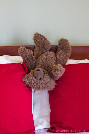 this bear is a friend; he lives at Evin's Holland Inn.