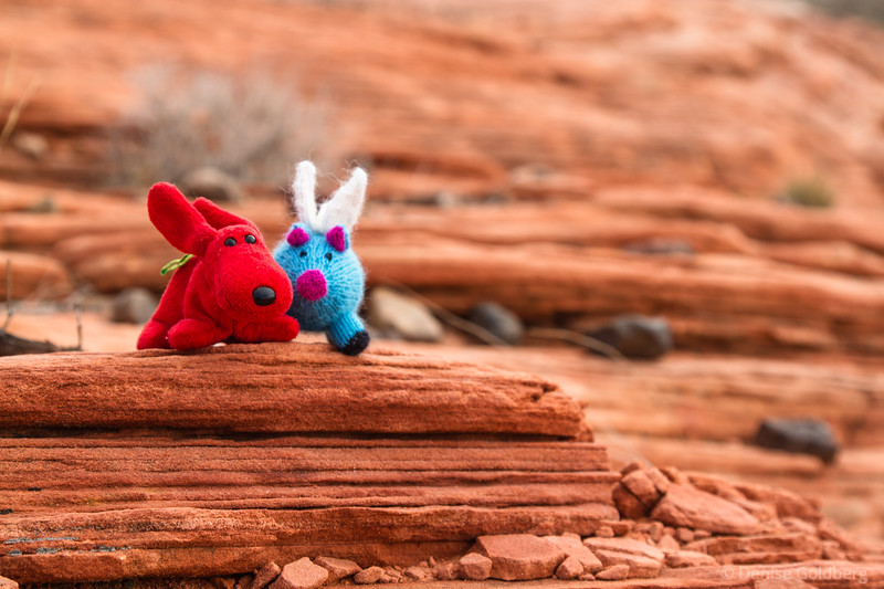 Rover and Blue in Valley of Fire State Park
