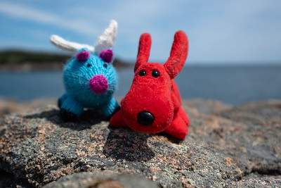 Rover & Blue, at Acadia National Park